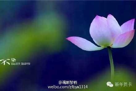 《蝶恋花》—魂断梦桥